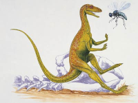 Bee and Dinosaur