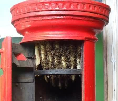These bees have chosen to make their nest in a post box!