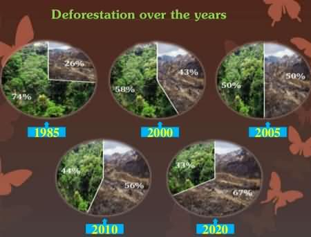 Diagram showing that forests are disappearing fast