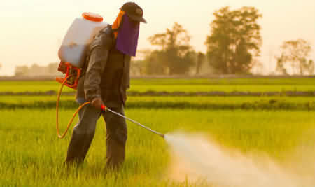 Spraying pesticide; note the protective clothing and breathing mask. The pesticide is harmful to health