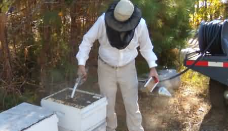 Here a beekeeper is pumping high fructose corn syrup into the hive