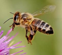 Bee Day: date to be arranged